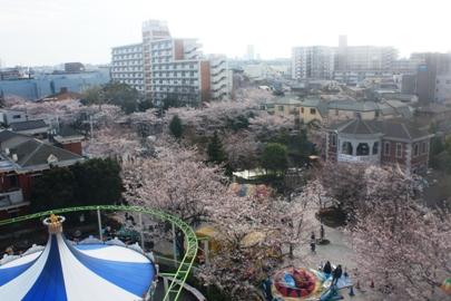 観覧車から見える桜