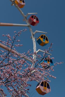 リナワールド観覧車と桜